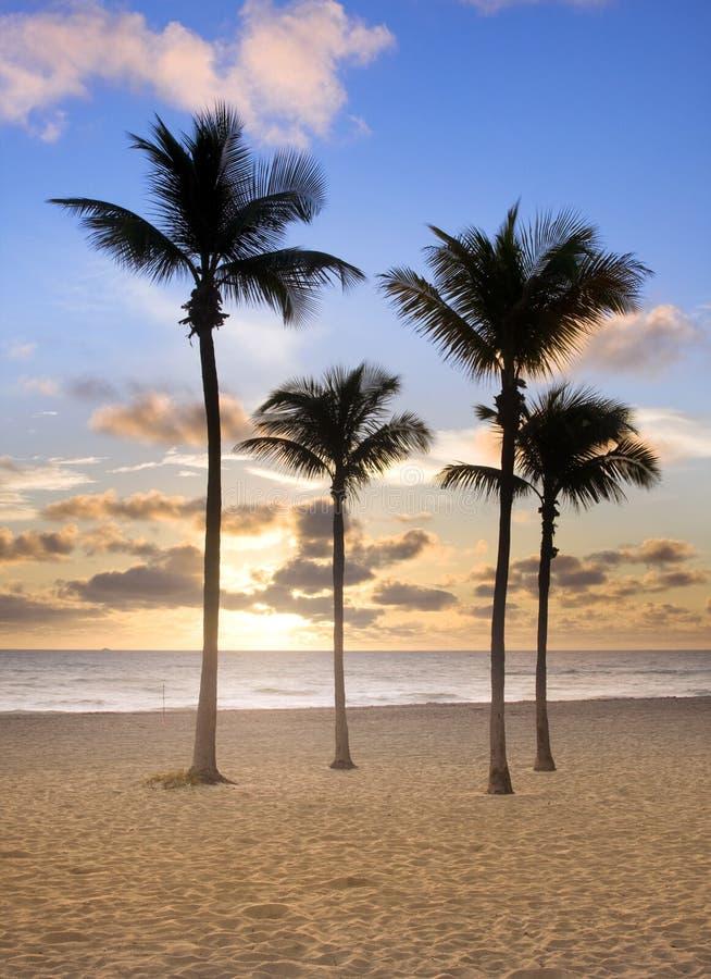 Kleurrijke zonsopgang in het Strand Florida van Miami stock afbeelding