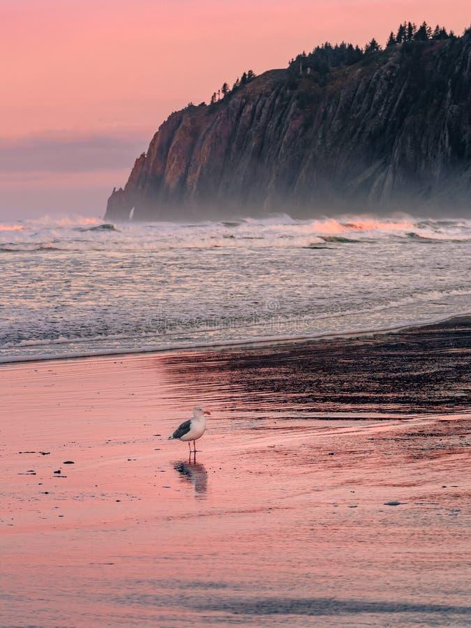 Kleurrijke zonsopgang op het oceaanstrand met berg op de achtergrond stock foto's