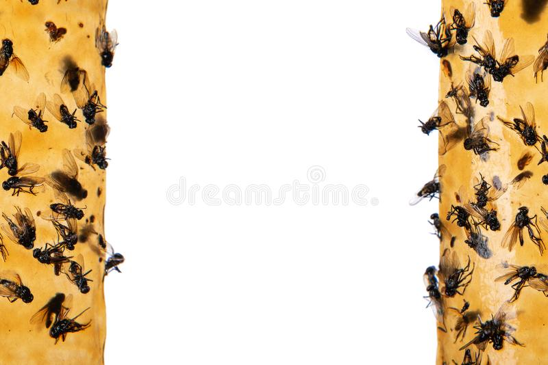 Kleverig vliegenpapier met gelijmde vliegen, val voor vliegen of vlieg-moord apparaat, op witte achtergrond Ook genoemd geworden  royalty-vrije stock fotografie