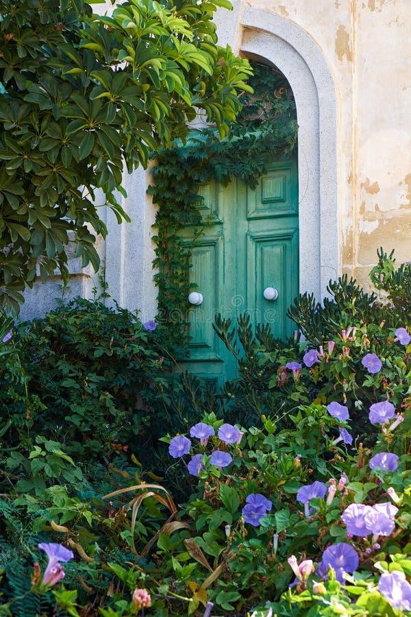 Klimop-behandelde groene deur in de muur van oud huis malta stock afbeeldingen