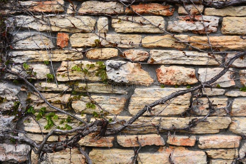 Klimop tegen steenmuur royalty-vrije stock foto