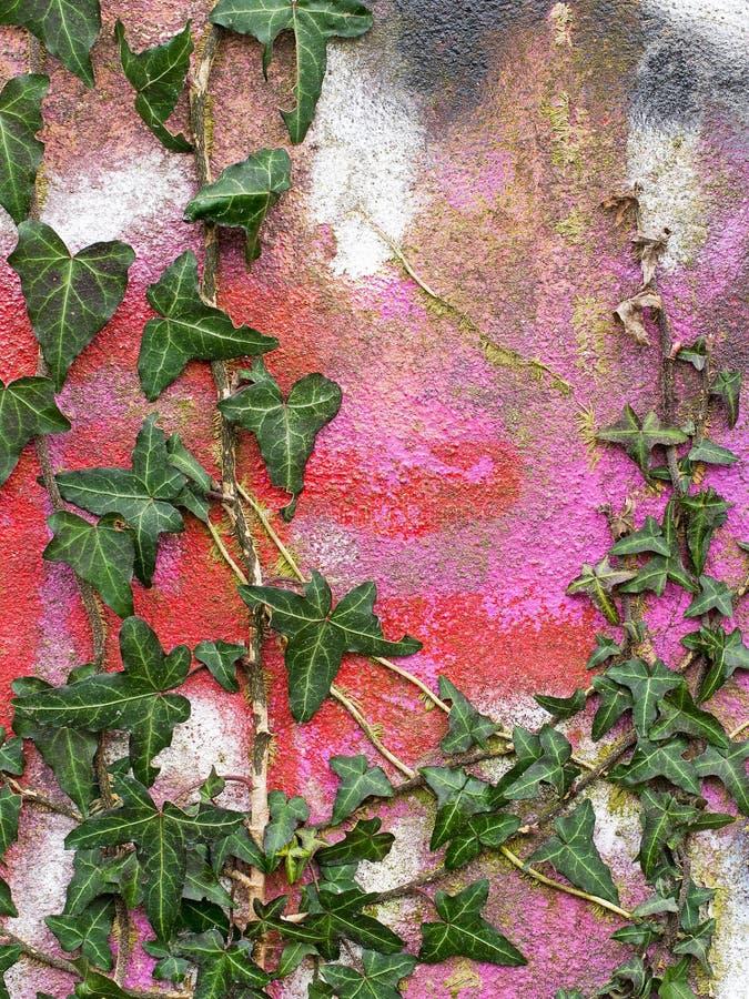 Klimopmuur met heldere rode graffiti, stedelijk bederf royalty-vrije stock afbeelding