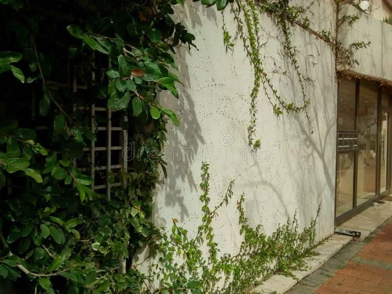 Klimplant en struik het groeien op muur van de bouw royalty-vrije stock fotografie
