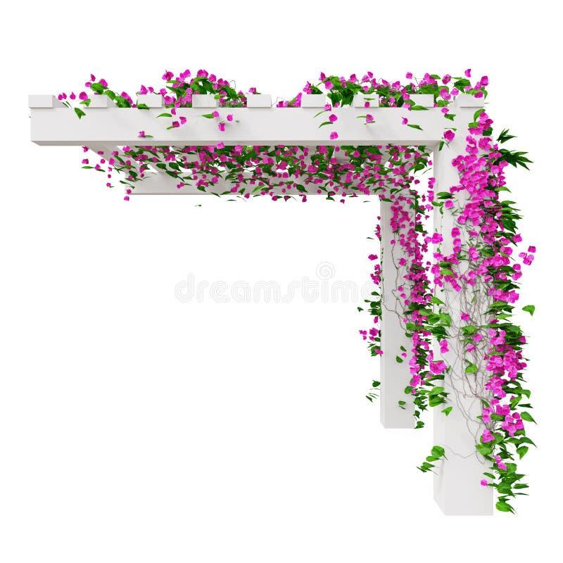 Klimplantbloemen, zijaanzicht vector illustratie