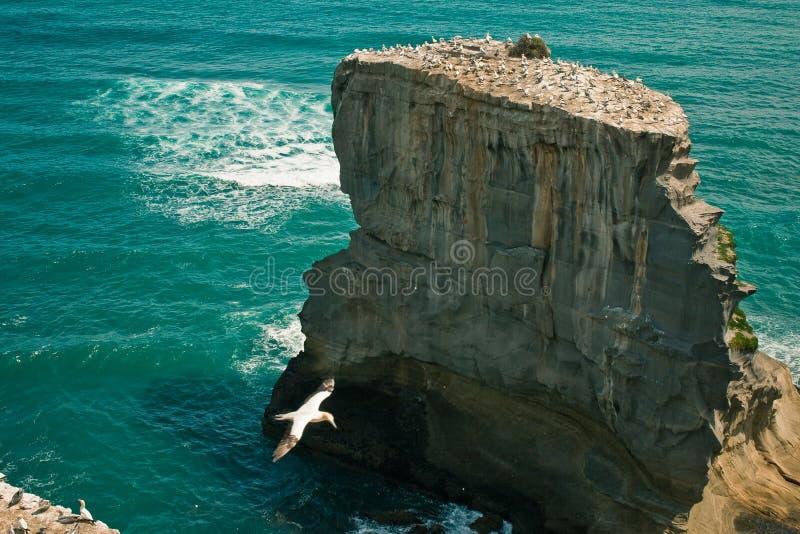 Klip in het overzees met zeemeeuwen stock fotografie