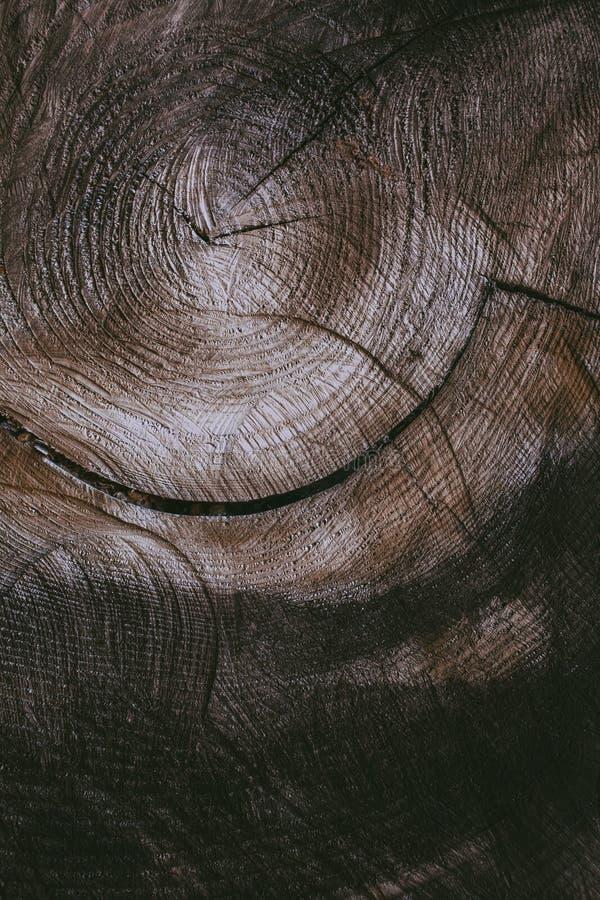 Klipp bakgrund för trädstammen och texturera Wood textur av den klippta trädstammen Closeupsikt av gammal wood textur Abstrakt te royaltyfri bild