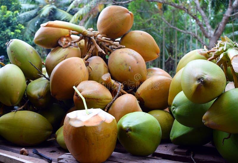 Klipp den öppna anbudgräsplankokosnöten med inre sugrör och gruppen av kokosnötter - sund naturlig dryck - den näringsrika Detoxd arkivbilder