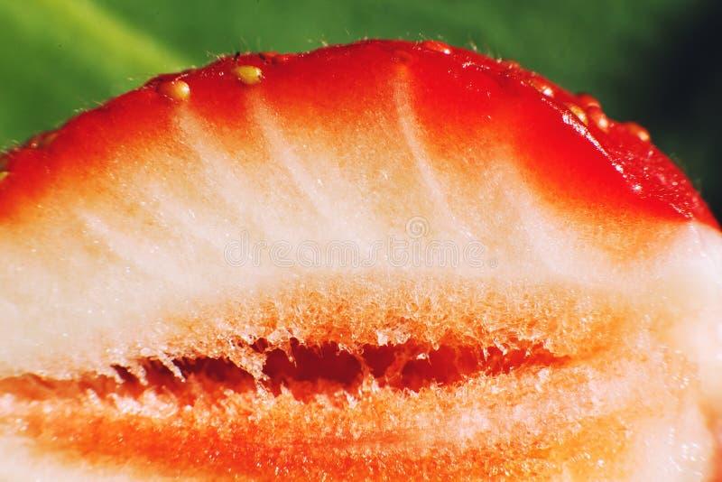 klipp den half jordgubben Jordgubbek?rna arkivfoton