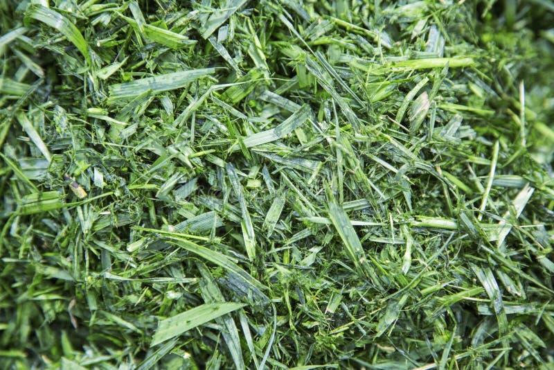 Klipp den mulched gräsurklipphögen arkivbild
