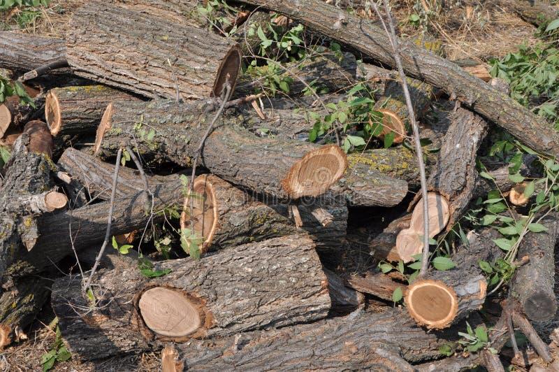Klipp den solbelysta högen för trädstammar arkivbilder