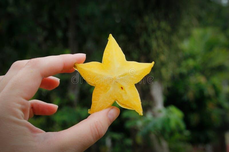 Klipp en skiva av stjärnafrukt i hand royaltyfri bild