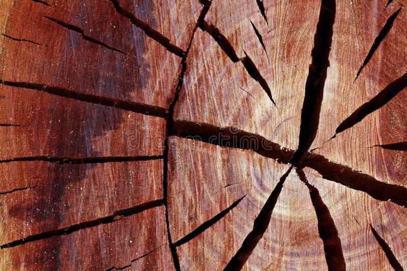 Klipp framsidan av eukalyptusträdjournalen med sprickamodellen fotografering för bildbyråer