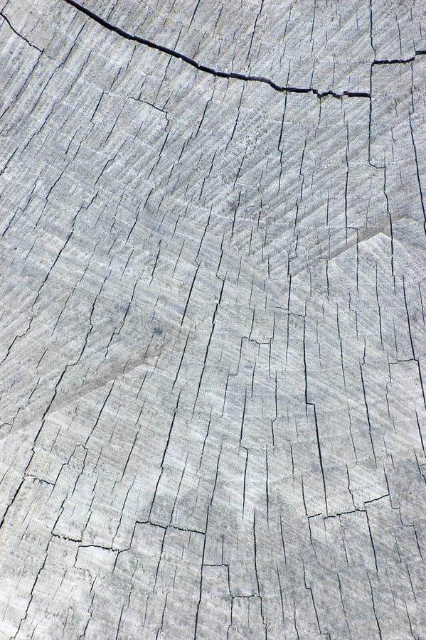 klipp gråa naturliga den red ut stubbetexturtreen royaltyfria foton