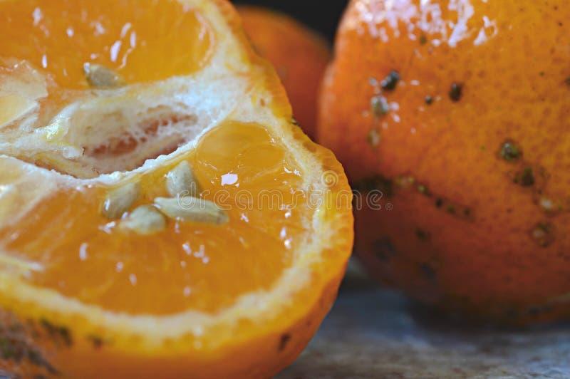 Klipp limefruktcitronen med frö arkivbilder