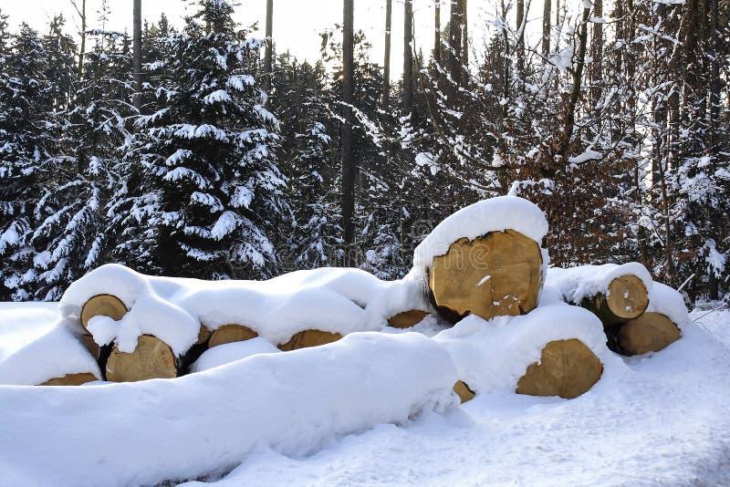 Klipp ner träd i vinter i snön, snö-täckte trädstammar, Bayern, Tyskland royaltyfri bild