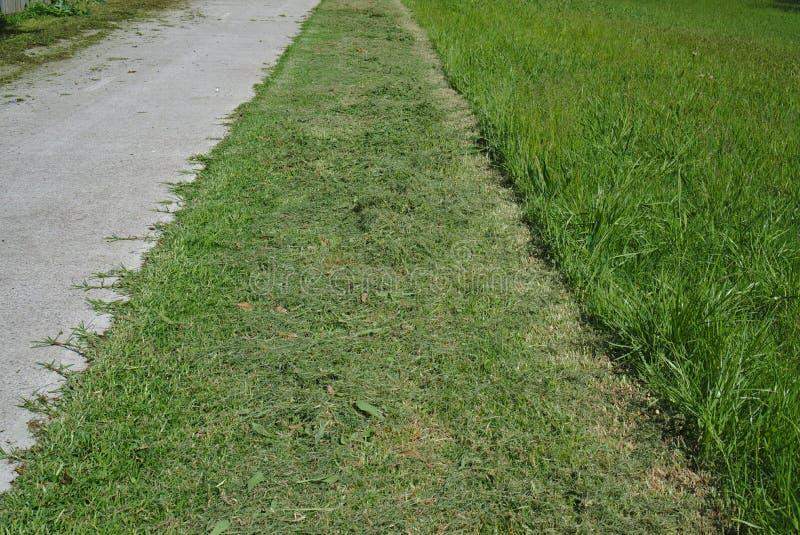 klipp nytt gräs royaltyfria bilder