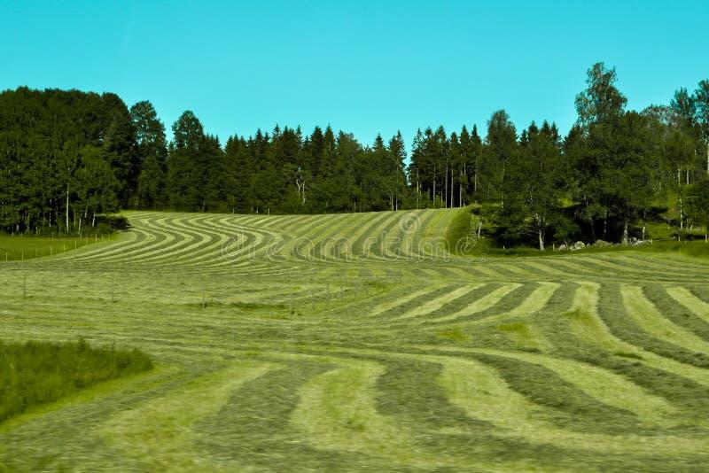 Klipp nytt gräs i linjer arkivfoto