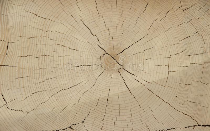 Klippa av forntida trä arkivfoton