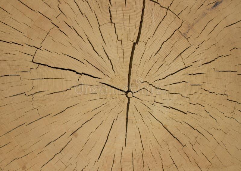 Klippa av forntida trä fotografering för bildbyråer