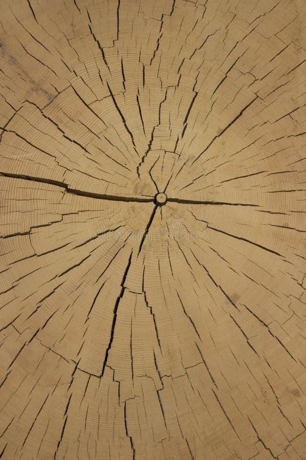 Klippa av forntida trä arkivbilder