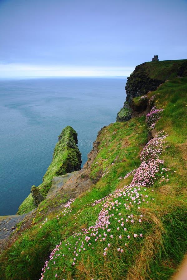 Klippa av Moher i Irland fotografering för bildbyråer