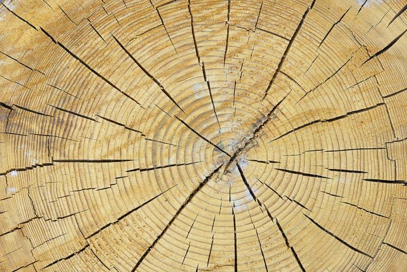 Klippa en trädstam royaltyfria bilder