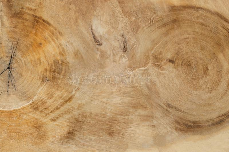 Klippa ett stort gammalt träd arkivbilder