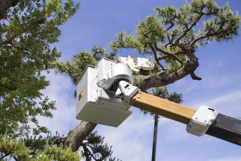 Klippa trädfilialerna på höjdpunkten med en chainsaw royaltyfri bild