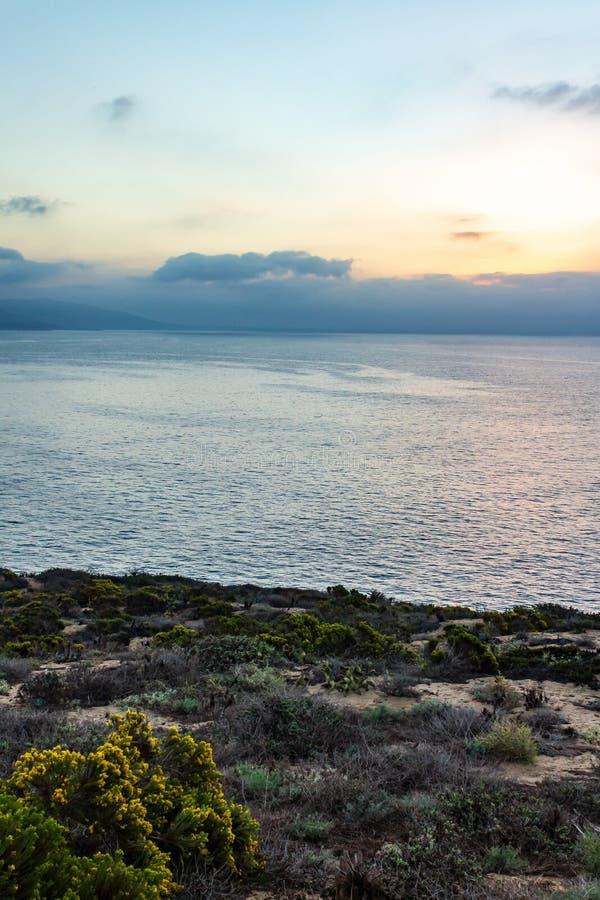 Klippasikt av vildblommor och Stilla havet med dimma på soluppgång royaltyfri bild