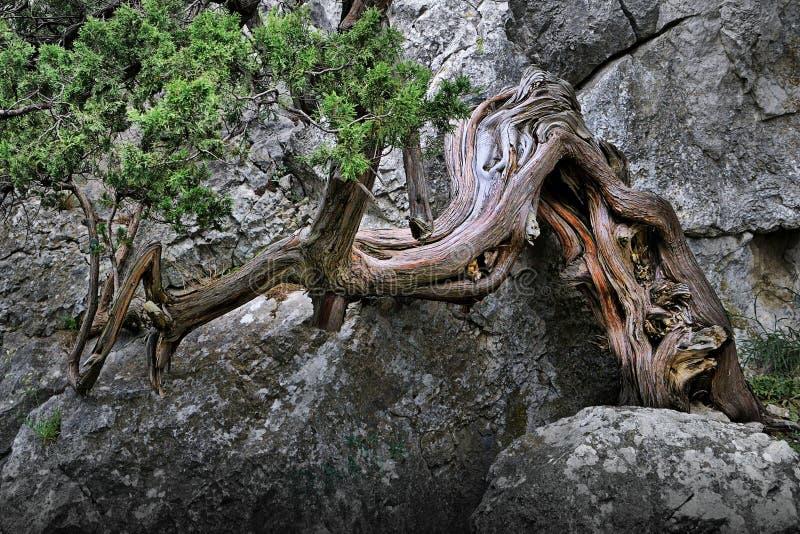 klippatree royaltyfri bild