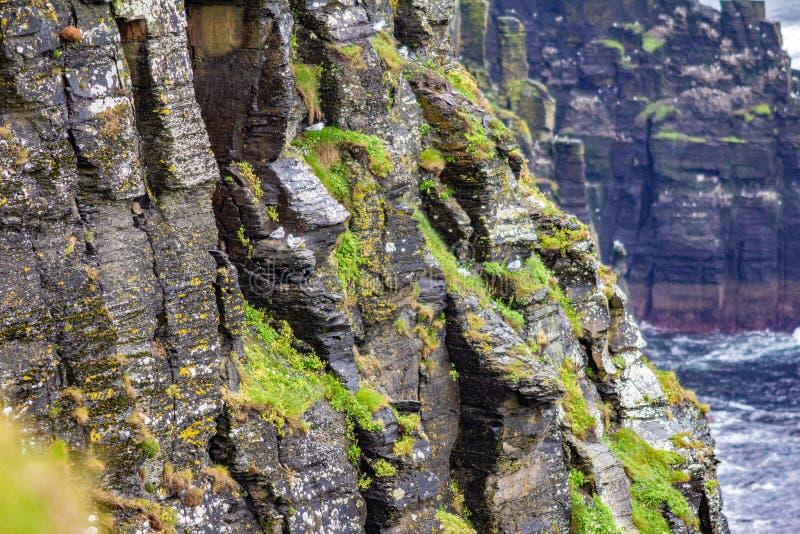 Klippe des Kalksteinfelsens mit Moos und Sturmmöwen im Küstenwegweg lizenzfreie stockfotografie