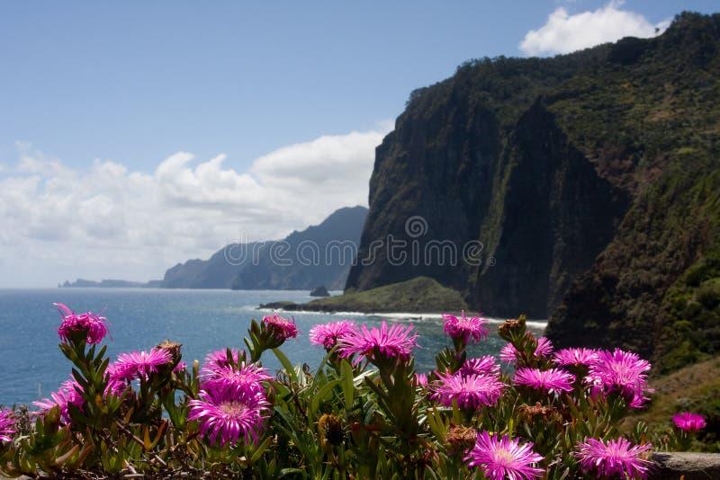 Klippe mit rosafarbenen Blumen lizenzfreie stockfotos