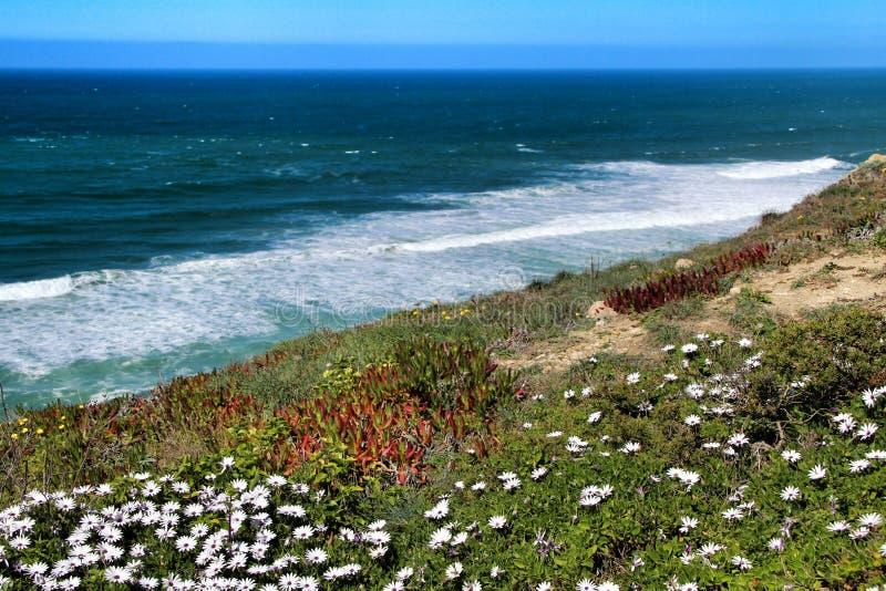 Klippenrand den Atlantik betrachtend und mit Vegetation umfasst lizenzfreies stockbild