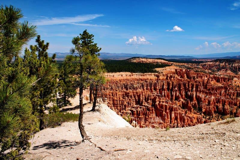 Klippenrand mit Felsenunglücksboten und nahe gelegenen Bäumen in Bryce Canyon, Utah lizenzfreie stockfotografie