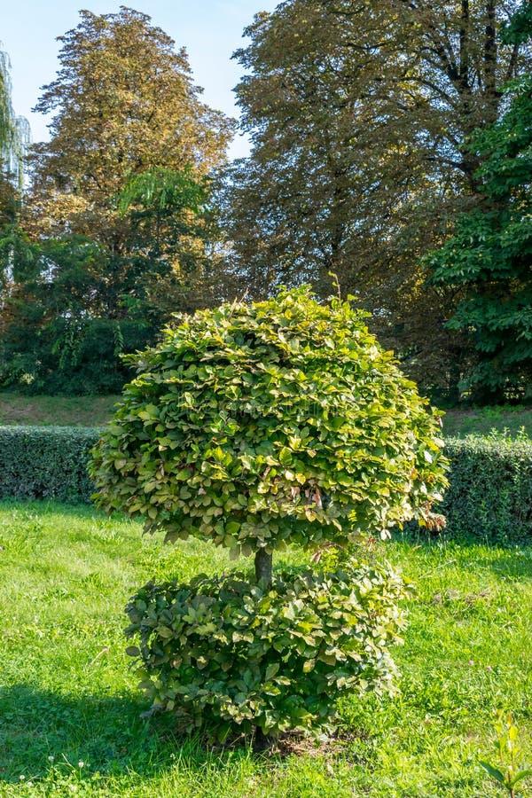 Klippt grön blomsterrabatt i trädgården royaltyfri bild