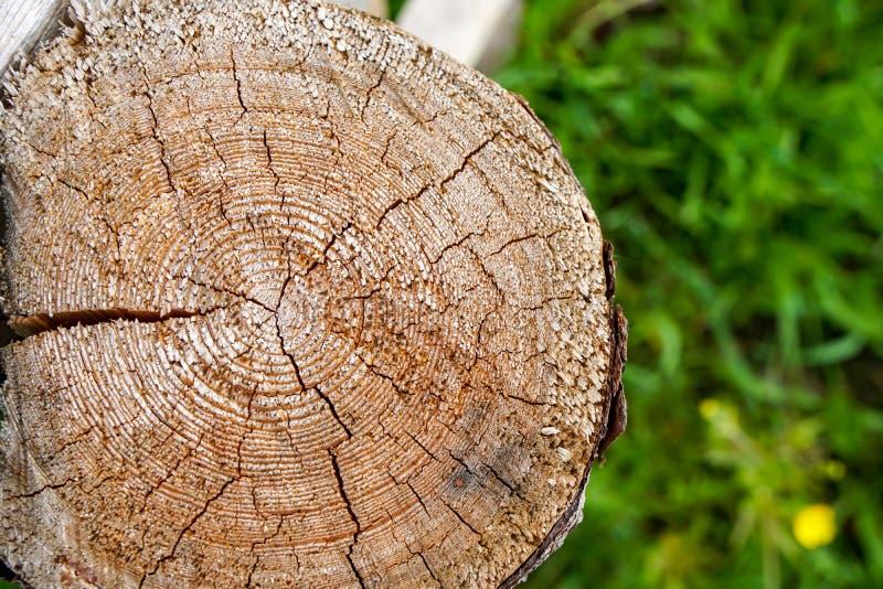 Klippt ner ett träd på en grön suddig bakgrund royaltyfri foto