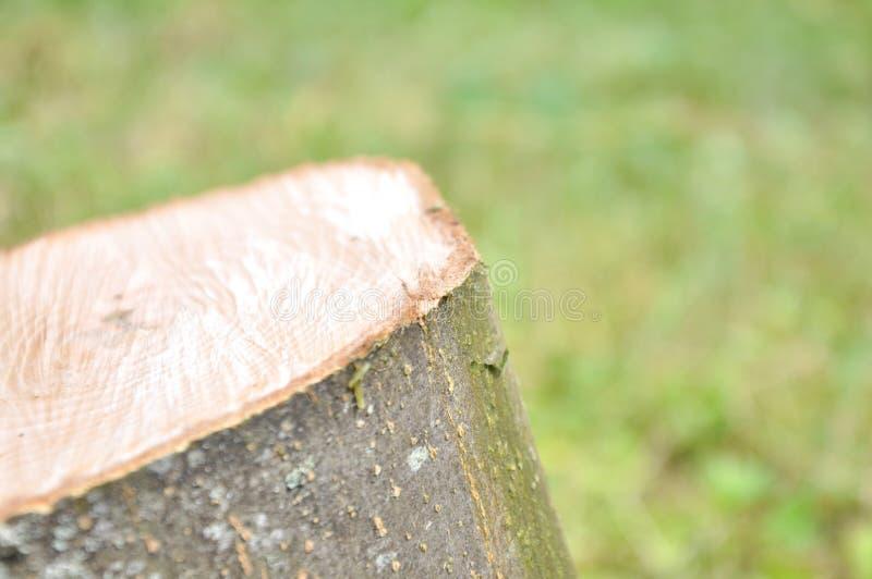 Klippt tjock trädstam Tr? texturerar royaltyfria bilder
