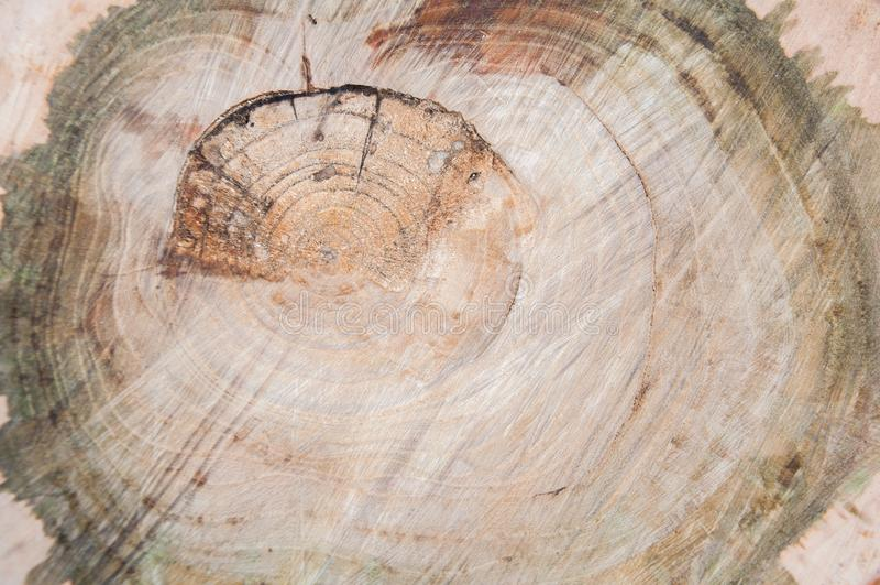 Klippt tjock trädstam Tr? texturerar royaltyfria foton