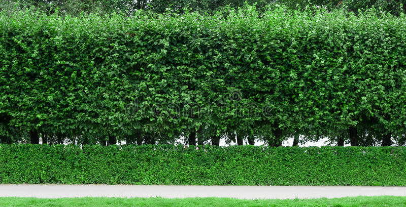klippte buskar i parkera och spåret royaltyfria bilder