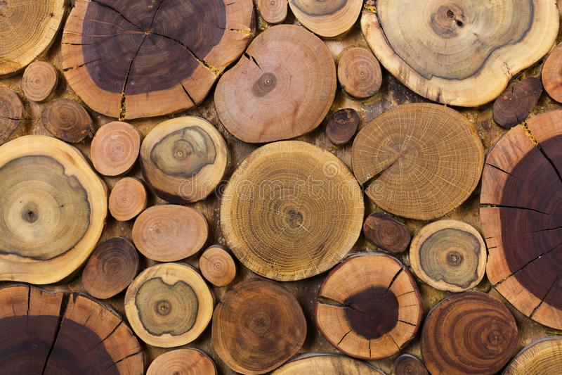 Klippte naturlig ekologisk mjuk kulör brunt för runda träomålade heltäckande och gul stubbebakgrund, träd olika format för avsnit arkivfoton
