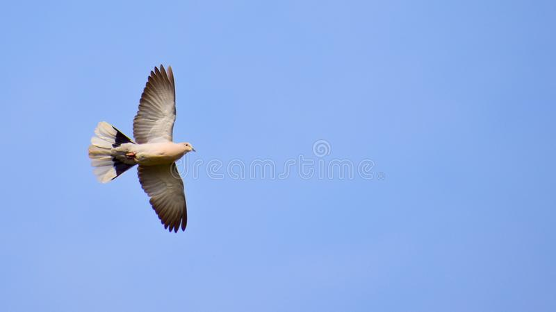 Klipsk flugafluga fotografering för bildbyråer