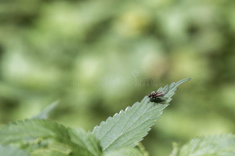 klipsk leaf arkivbilder