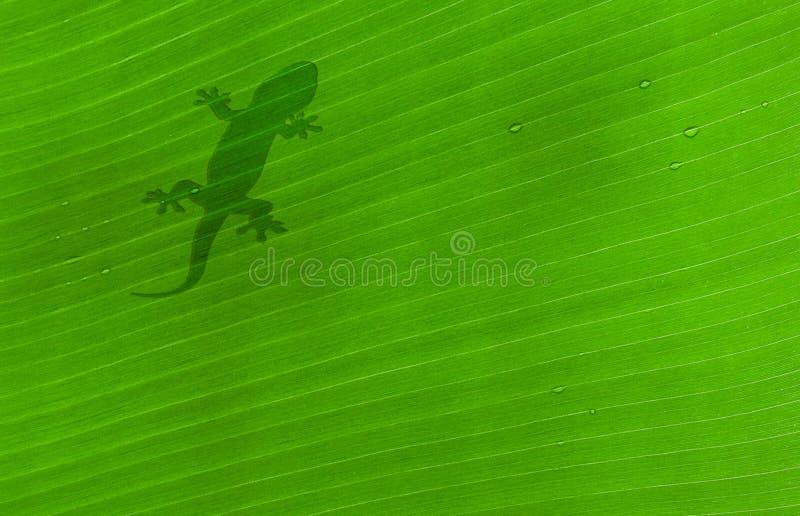 Download Klipsk leaf fotografering för bildbyråer. Bild av åder - 3545225