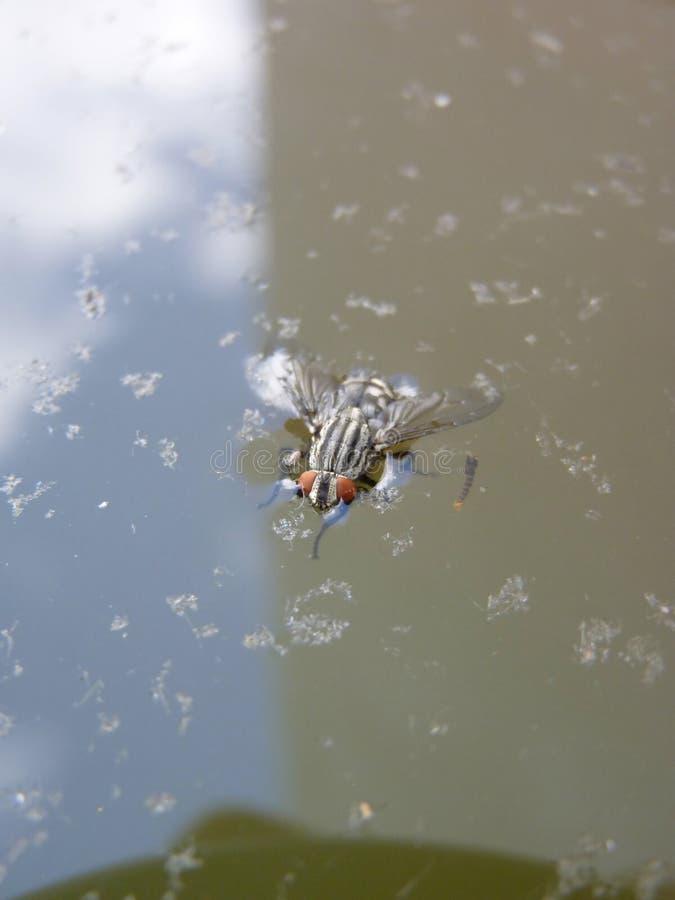 Klipsk simning och drunkning i vatten royaltyfri bild