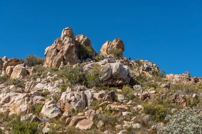 Klipspringer RAM och tacka på slingan till det maltesiska korset arkivbilder