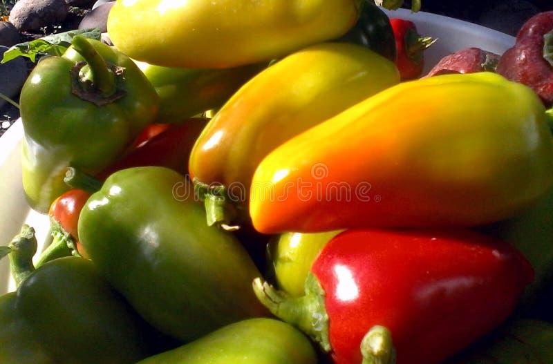 klocka för grönsakhöstskörd royaltyfria bilder