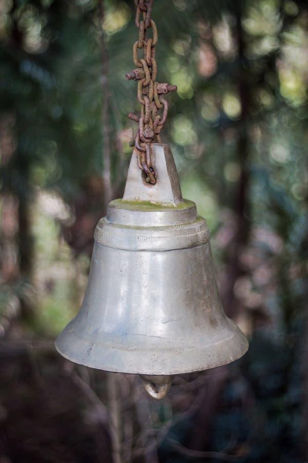 Klocka i mitt av skogen royaltyfri fotografi