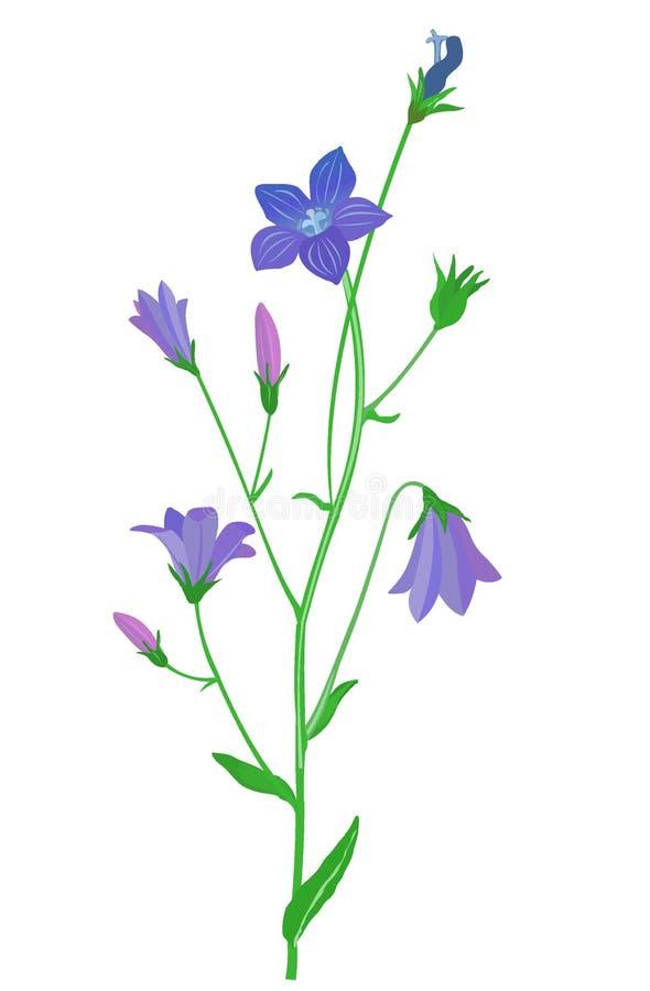 klok-bloem royalty-vrije illustratie