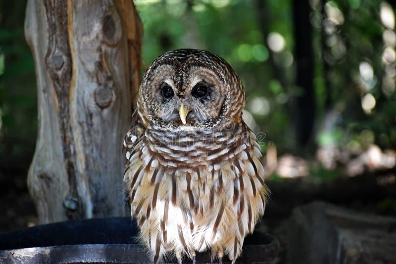 klok gammal owl royaltyfri fotografi