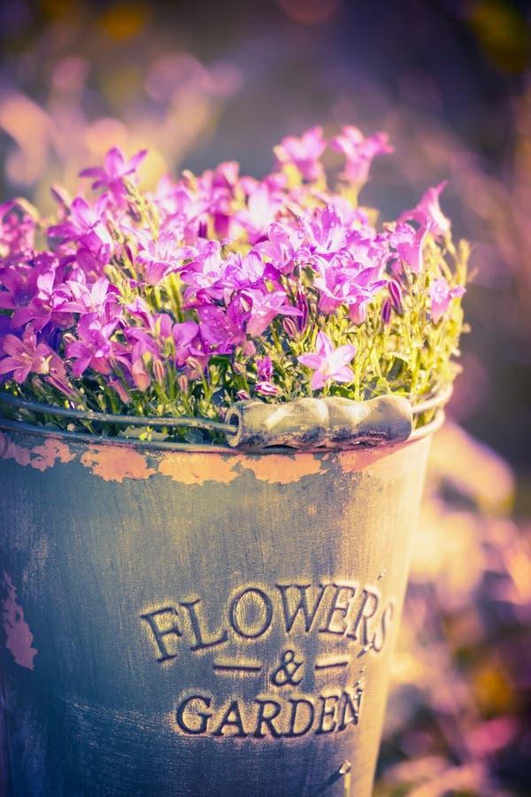 Klokjebloemen in emmer met gestemde inschrijvingsbloemen en tuin, royalty-vrije stock afbeelding